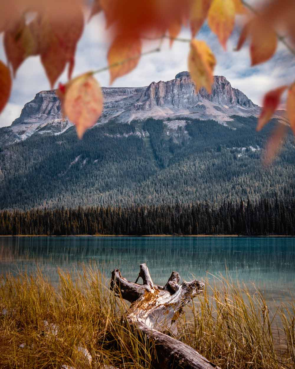 Rocky Mountains Canada - Photographer @magpie_n_moo / Michèle Thompson