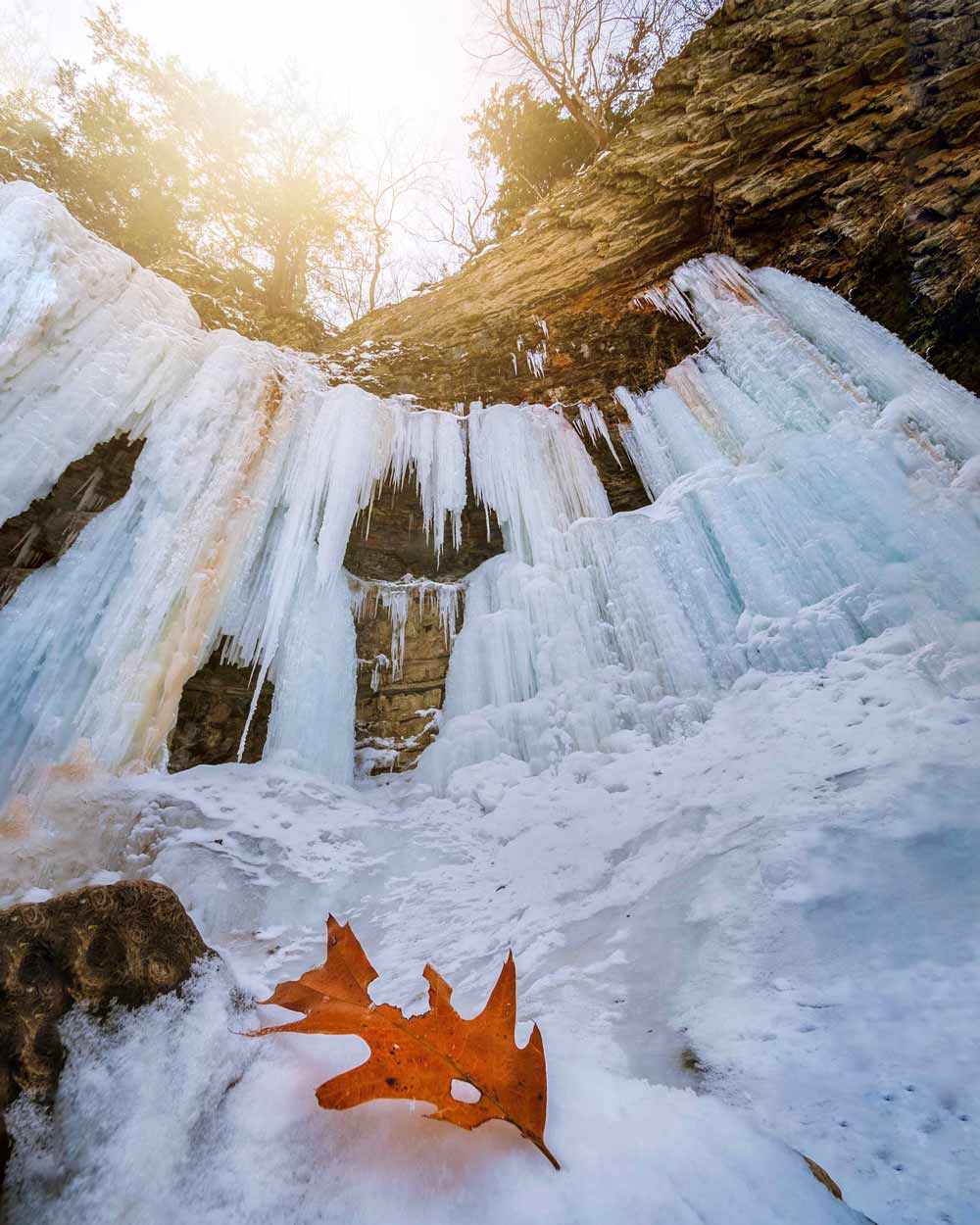 Tew's Falls Ontario winter leaf - Photographer @magpie_n_moo / Michèle Thompson