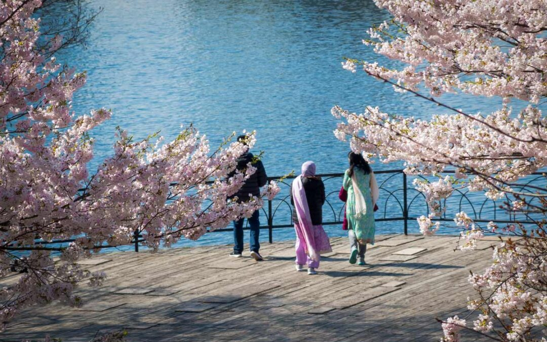 City of Toronto Launches Cherry Blossom Cam and Closes High Park